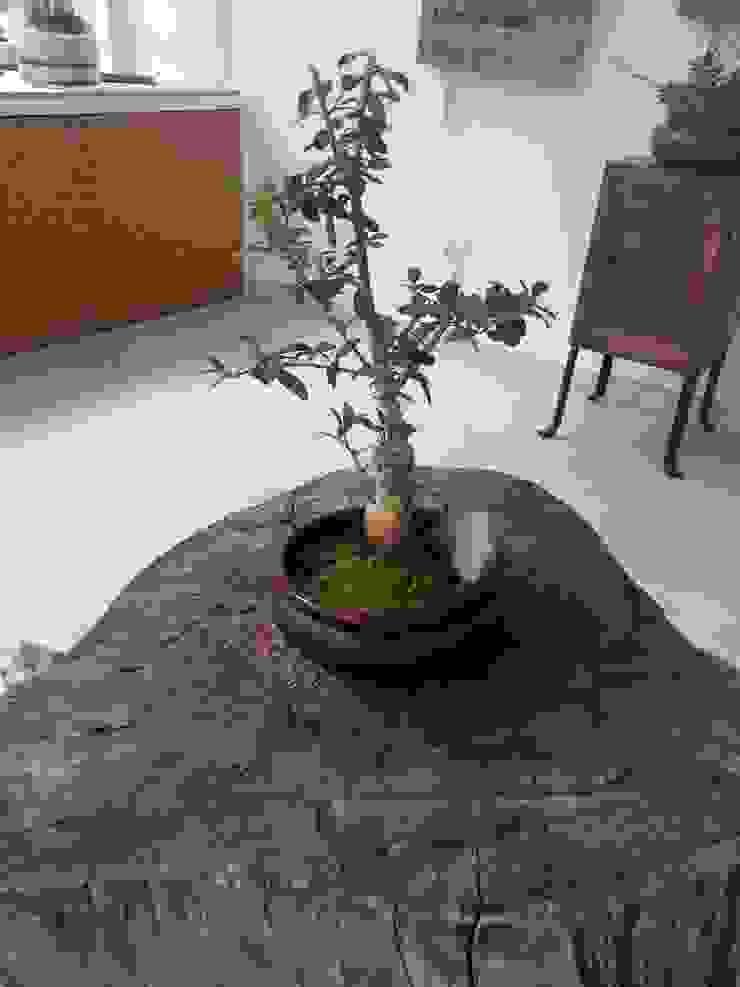 Bonsai de oliveira por Interior Vivo Mediterrânico