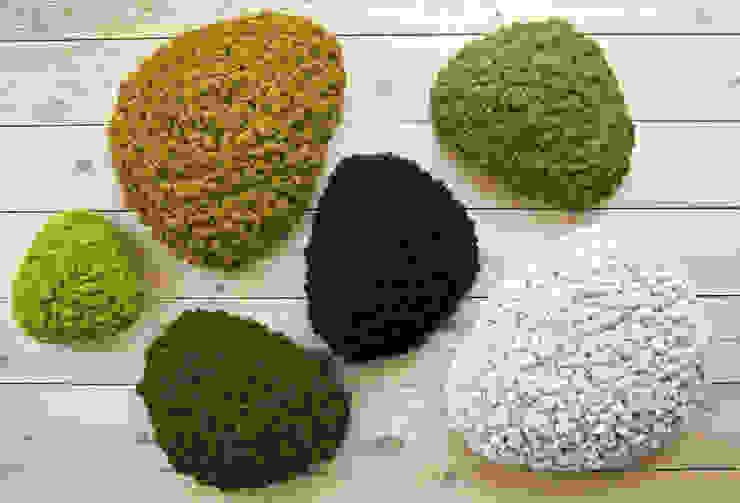 Vorstellung unserer Produkte: Pflanzen- und Moosbilder von styleGREEN: modern  von FlowerArt GmbH | styleGREEN,Modern