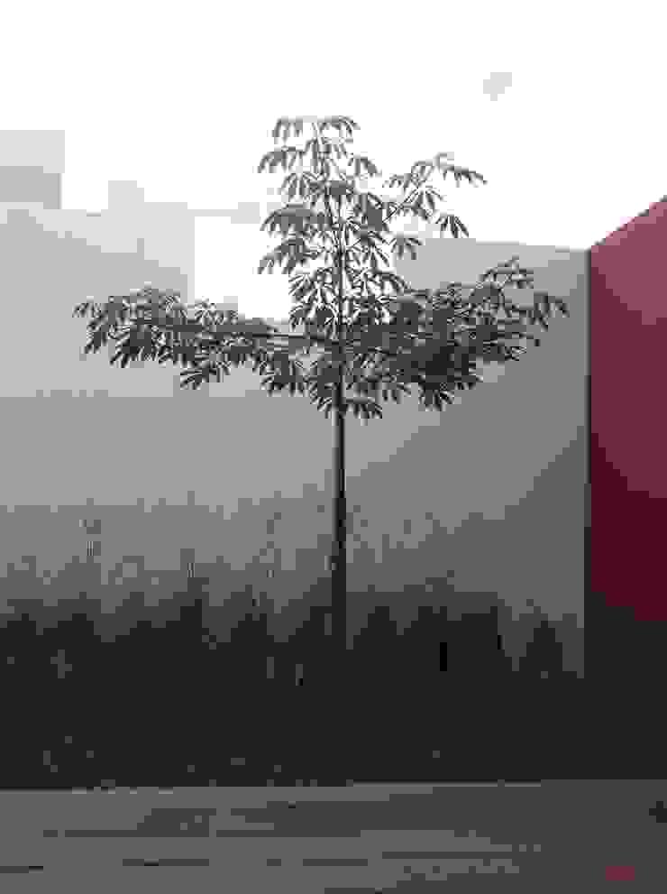 Arquimia Arquitectos Сад