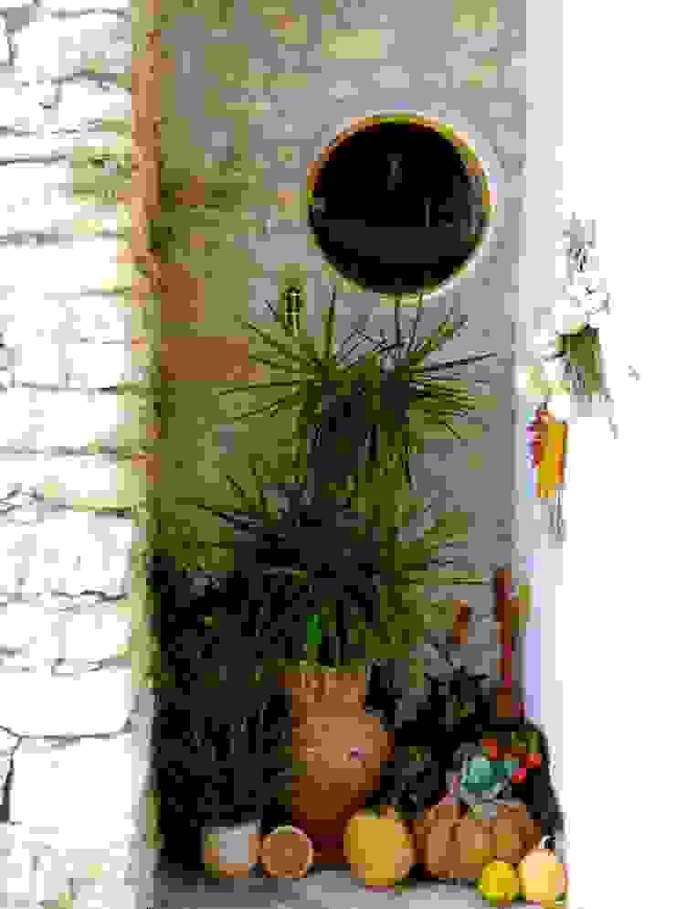 pedro quintela studio Garden Plants & flowers