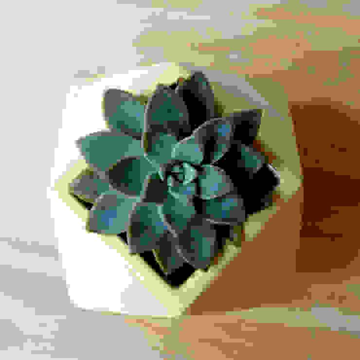 Bizcocho HaushaltPflanzen und Zubehör Türkis