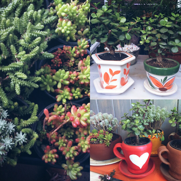Variedades de plantas suculentas, en macetas de barro y ceramica Balcones y terrazas eclécticos de Conexion Ecléctico