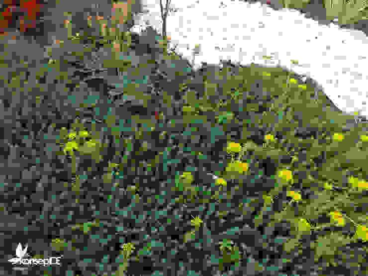 Bitkilendirme çalışması Akdeniz Bahçe konseptDE Peyzaj Fidancılık Tic. Ltd. Şti. Akdeniz