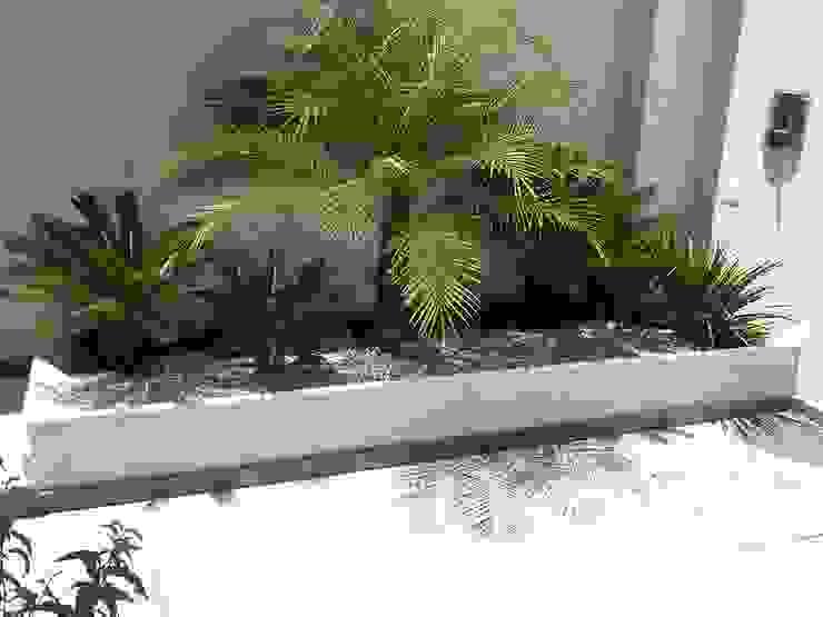Tropical Contemporâneo por Mateus Motta Paisagismo