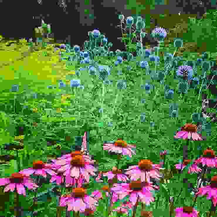 Echinacea und Disteln Klassischer Garten von grasgrau - GARTENDESIGN Klassisch