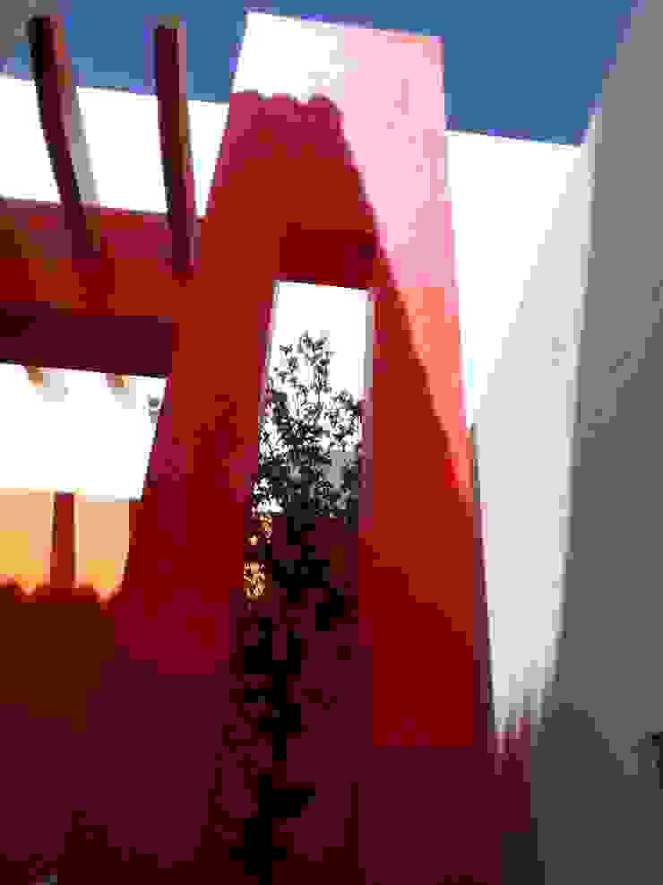Arqca Modern style gardens