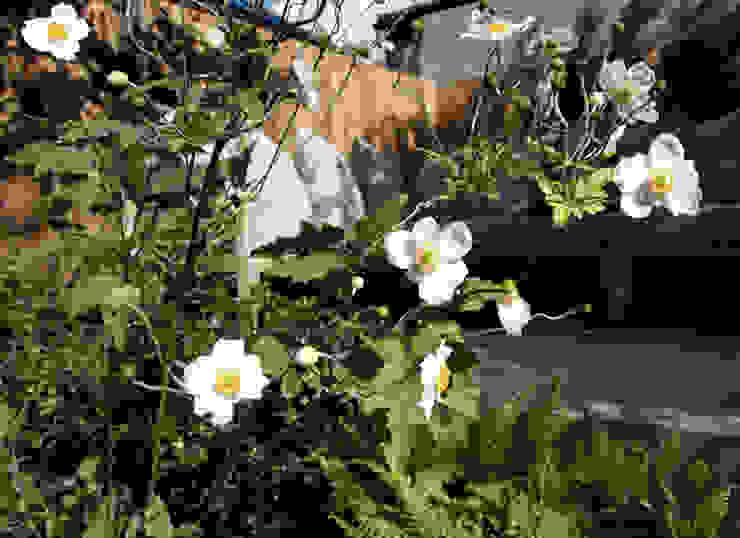 Anemone x hybrida 'Honorine Jobert' Modern garden by Tom Massey Landscape & Garden Design Modern