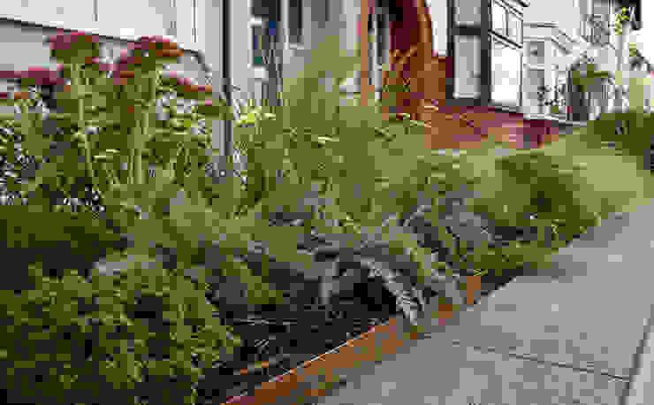 Front garden planting Modern garden by Tom Massey Landscape & Garden Design Modern