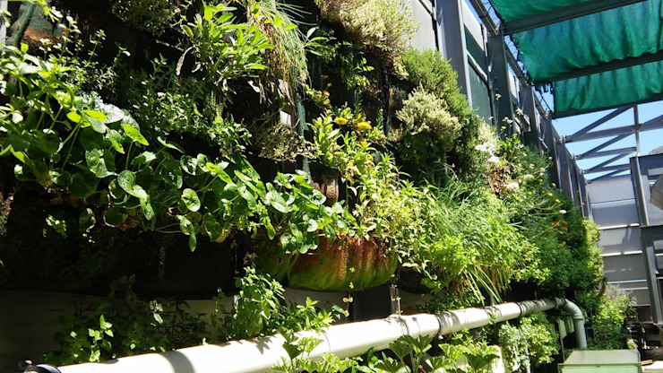 Westin Hotel roof garden in its third summer… flowering!: eclectic  by Vertical Veg (Pty) Ltd, Eclectic