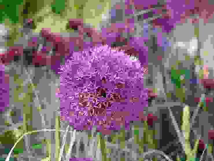 Alliums for cottage garden design van homify Landelijk