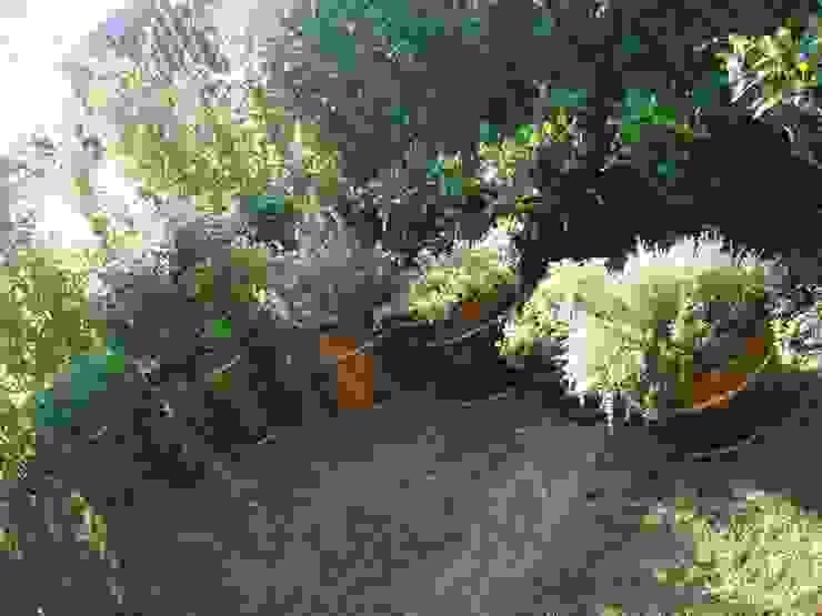 condomínio Fazenda Boa Vista EKOA Paisagismo Jardins tropicais