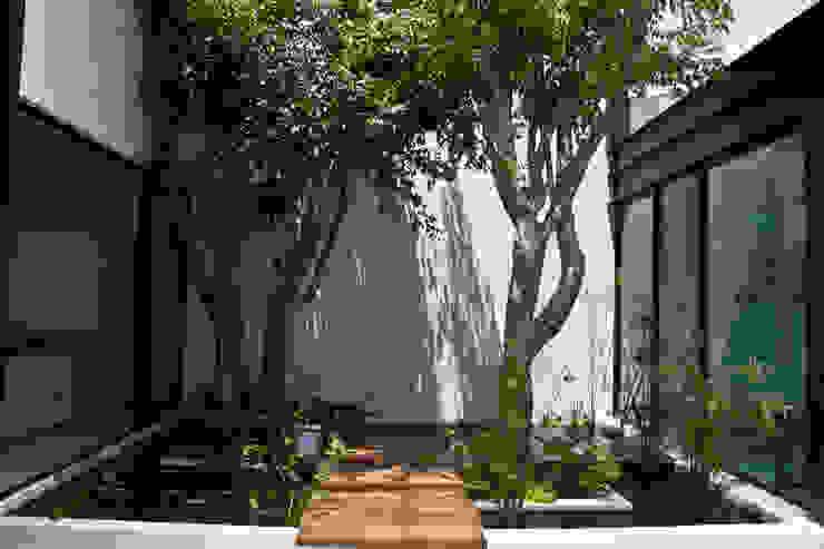 CASA DEL ARBOL Jardines modernos de Vau Studio Moderno