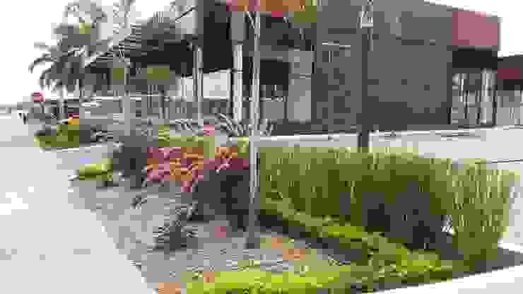 THE CORNER PLAZA—PANAMA CITY Modern Garden by TARTE LANDSCAPES Modern