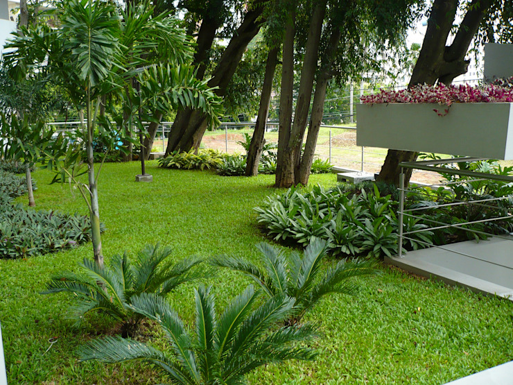 LUXOR TOWERS—PANAMA CITY Tropical style garden by TARTE LANDSCAPES Tropical