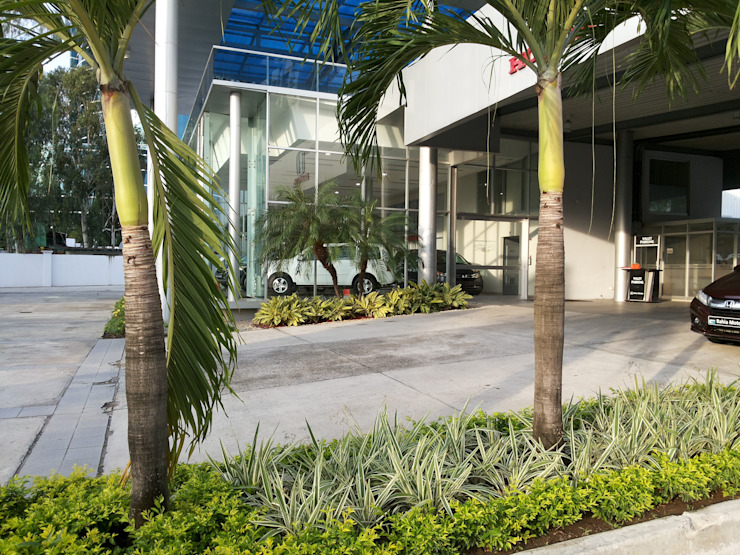 BAHIA MOTORS AT COSTA DEL ESTE—PANAMA CITY Tropical style garden by TARTE LANDSCAPES Tropical