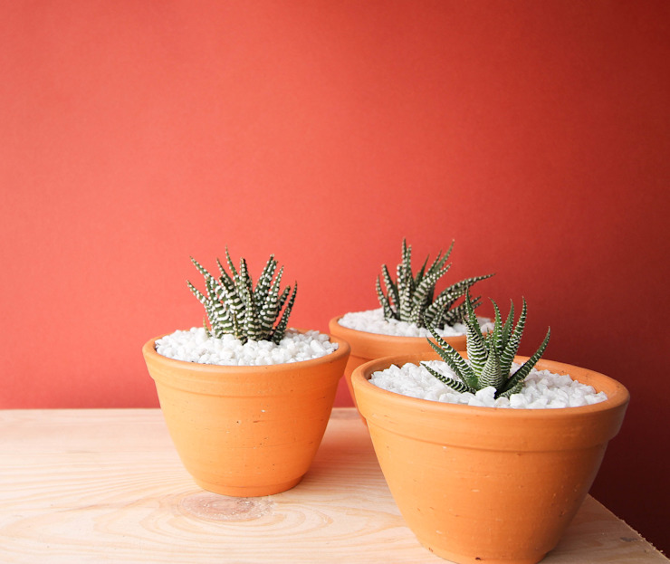 Succulents Marga CasaPiante & Accessori