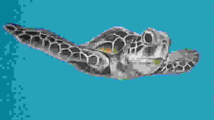 Tartaruga di LAB - officina d'arte & restauro