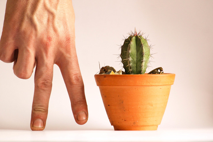 Cactus by Marga Рустiк