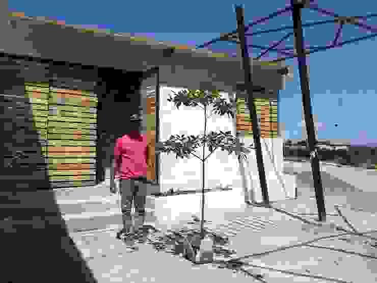 Transplantando vegetación nativa a patio interno de la vivienda Casas de estilo minimalista de Taller de Desarrollo Urbano Minimalista