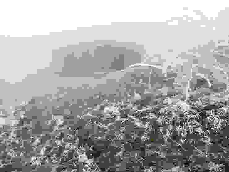 Backraum Architektur Rumah Modern Kayu
