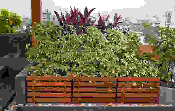 Potted plants Modern garden by Land Design landscape architects Modern
