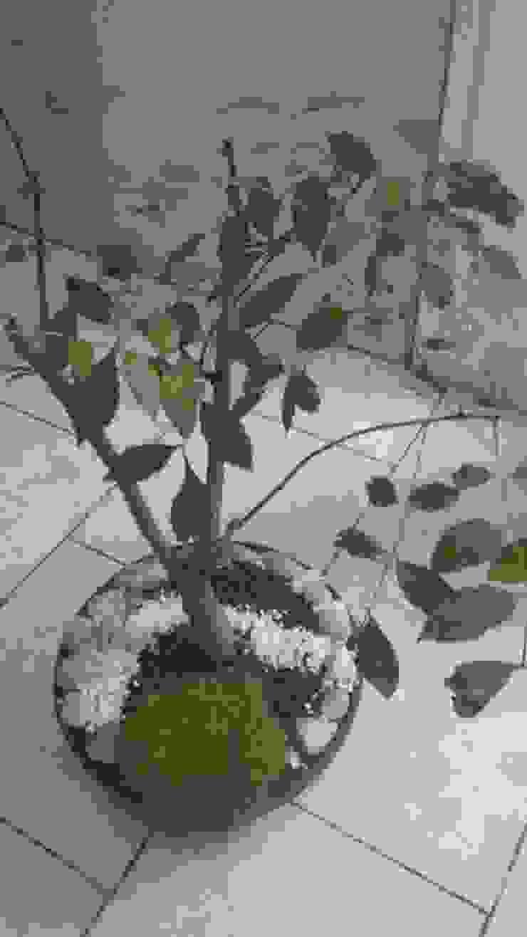 SCH2laap arquitectura + paisajismo Garden Plant pots & vases