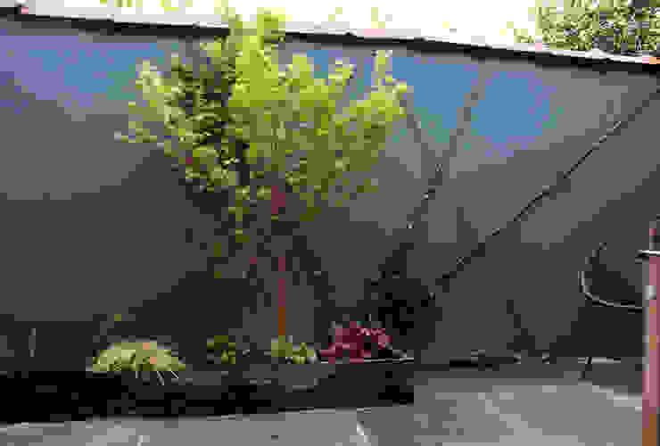 Érable japonnais Jardin asiatique par Constans Paysage Asiatique