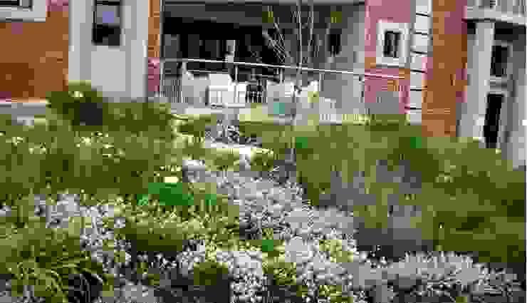 Jardines de estilo moderno de Young Landscape Design Studio Moderno