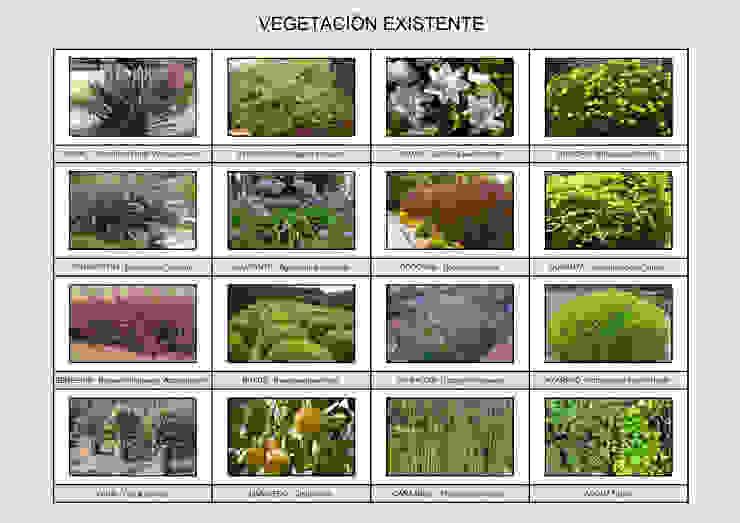Anteproyecto Jardín Müller Jardines modernos: Ideas, imágenes y decoración de Dhena CONSTRUCCION DE JARDINES Moderno