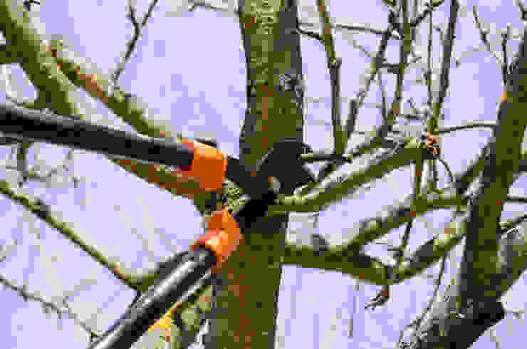 Tree Trimming by Johannesburg Tree Felling