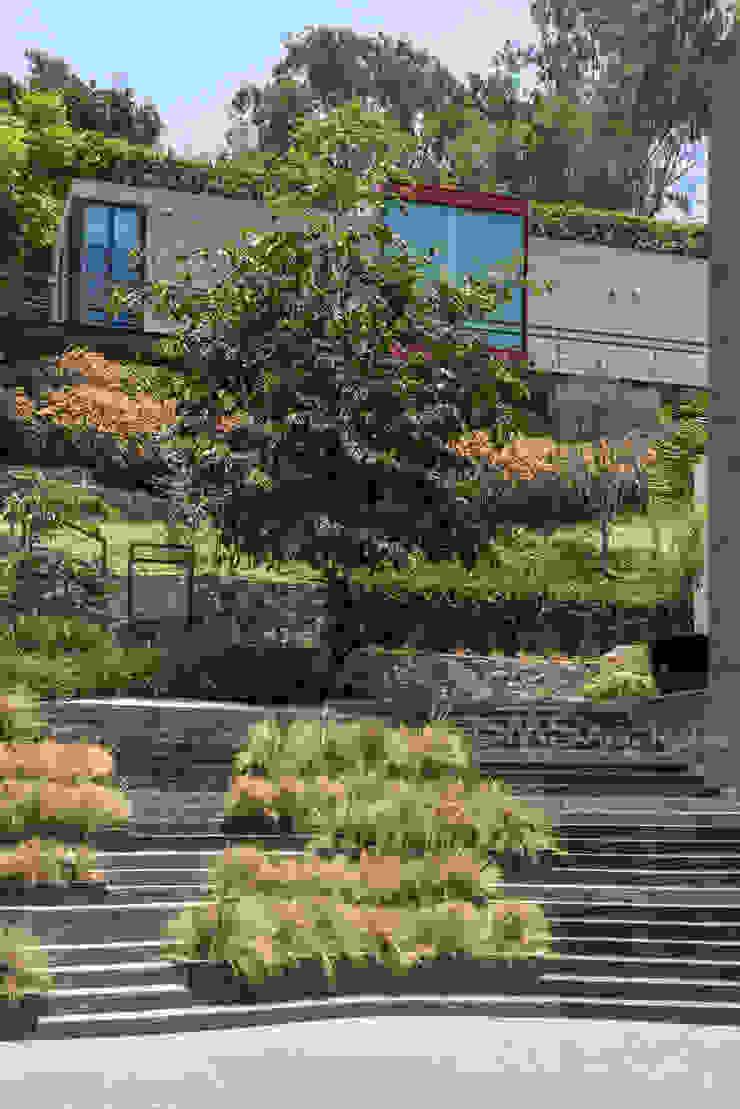 ANDENES Casas modernas: Ideas, diseños y decoración de DMS Arquitectas Moderno