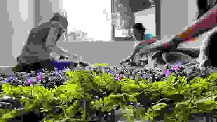 elaboración de muro verde. Jardines de estilo moderno de 3HOUS Moderno