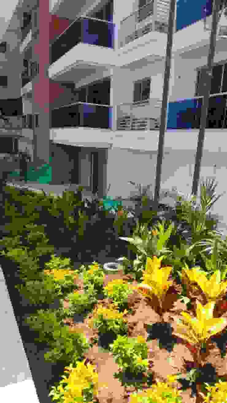 CONJUNTO MEDITERRANEAN TOWERS – BARRANQUILLA – COLOMBIA Jardines de estilo tropical de BRASSICA SOLUCIONES PAISAJISTICAS S.A.S. Tropical