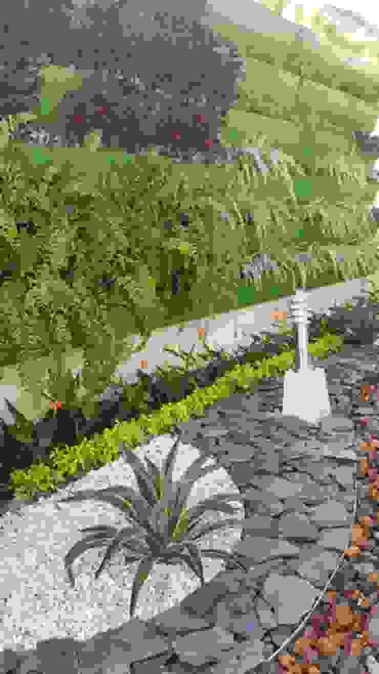 CONJUNTO ANCARES CAMPESTRE - BARRANQUILLA - COLOMBIA Jardines de estilo tropical de BRASSICA SOLUCIONES PAISAJISTICAS S.A.S. Tropical