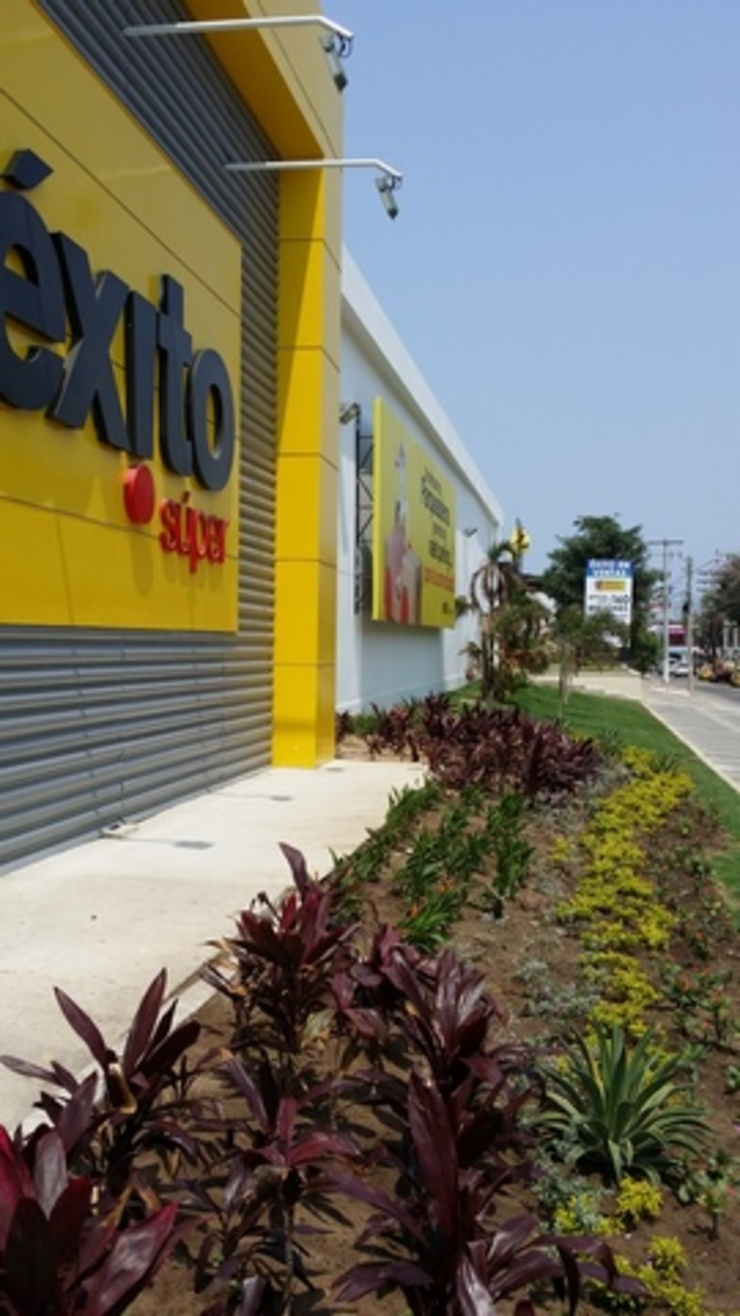 Tropical style garden by BRASSICA SOLUCIONES PAISAJISTICAS S.A.S. Tropical