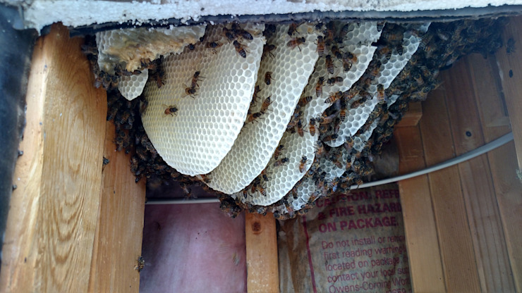 Bee Removal by Pest Control Durban