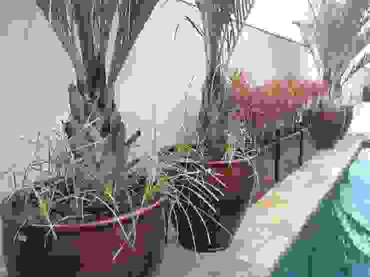 Casa A.Z. Jardins tropicais por Eneida Lima Paisagismo Tropical