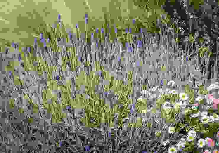 Shrub and perennial planting Modern Garden by Tom Massey Landscape & Garden Design Modern