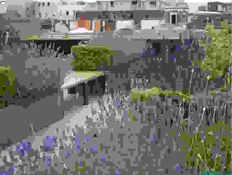 Ganton Street Roof Terrace by Aralia Modern Wood Wood effect