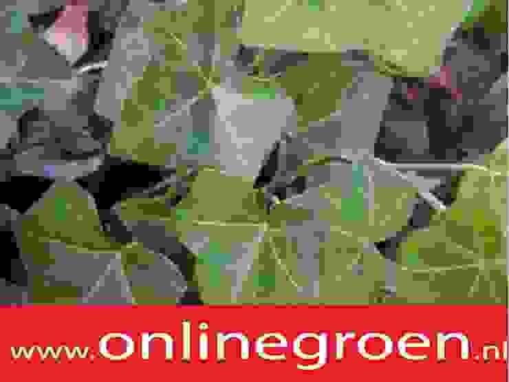 Planten voor bodem onlinegroen van onlinegroen