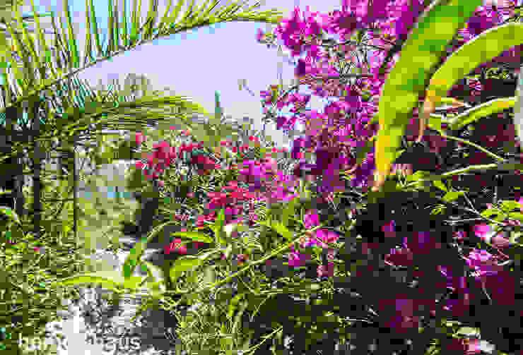 Jardín tropical Jardines de estilo mediterráneo de Home & Haus | Home Staging & Fotografía Mediterráneo