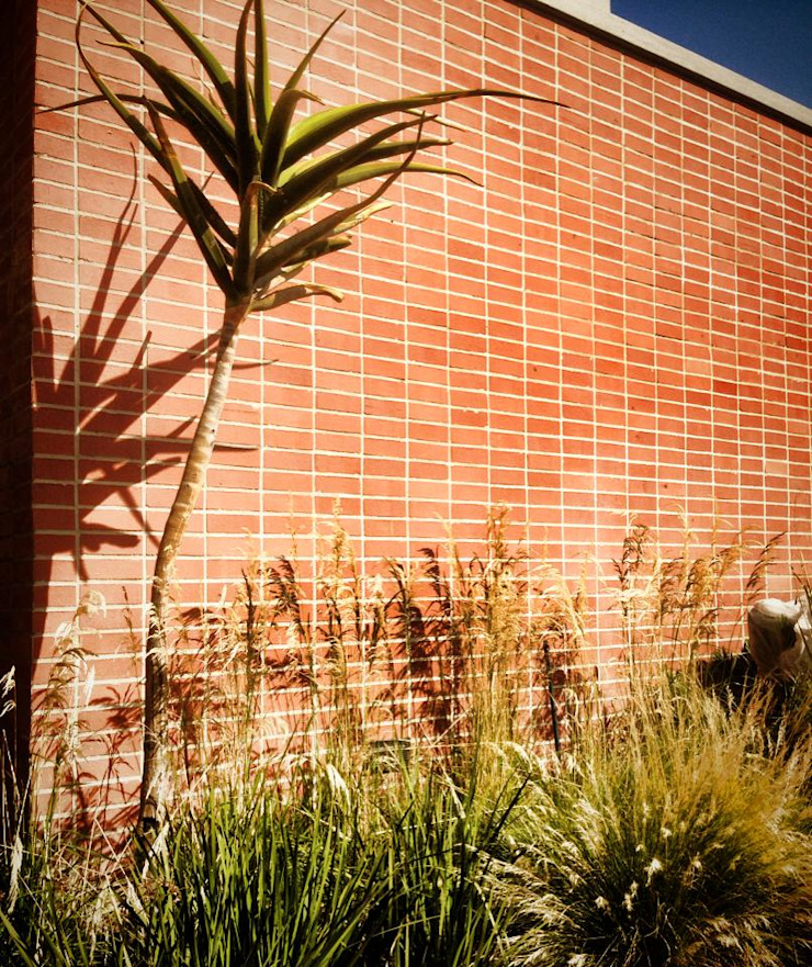 Simple yet effective feature wall - gentle grasses and tree aloe with stature Acton Gardens Country style houses