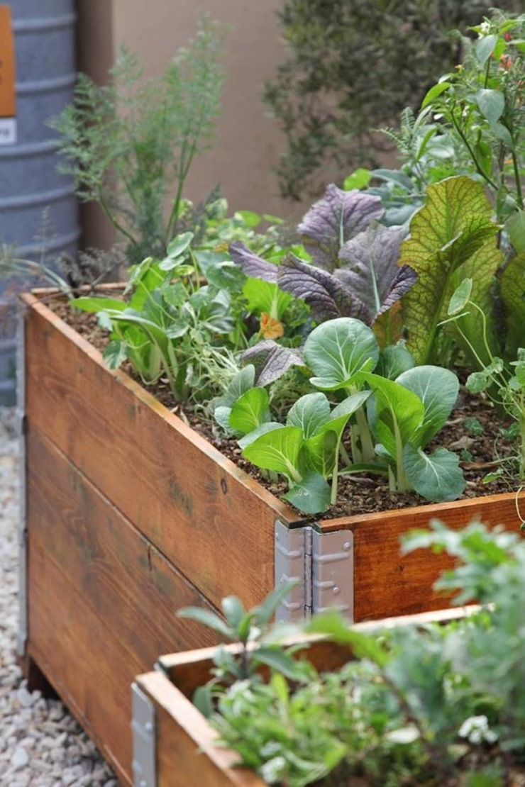 Organic vegetable and herb garden in recycled pallets planter Industrial style gardens by Acton Gardens Industrial Wood Wood effect