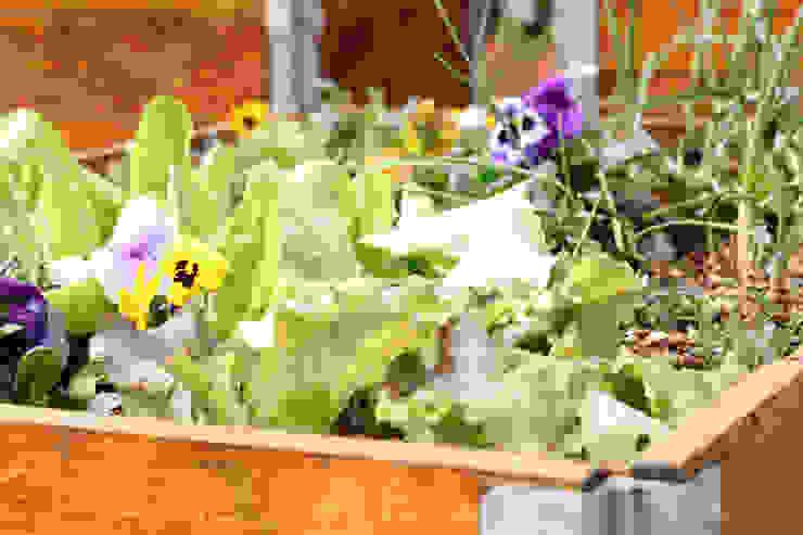 organic vegetable garden Industrial style garden by Acton Gardens Industrial