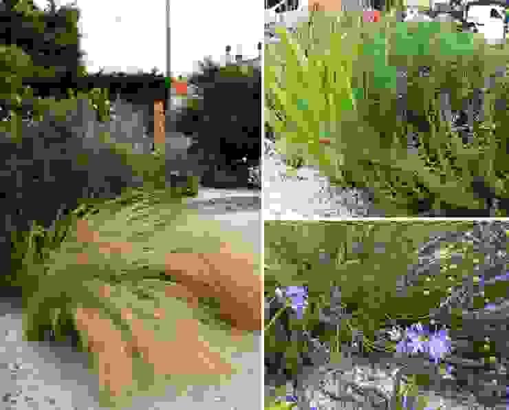 Jardines mediterráneos de Constans Paysage Mediterráneo