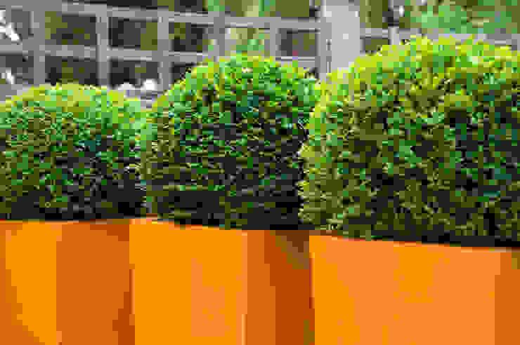 Ornage fibreglass planters and box balls:  Garden by Earth Designs,