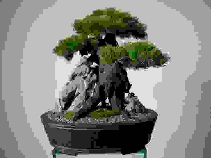 от Jan Pavlinec Классический Бамбук Зеленый