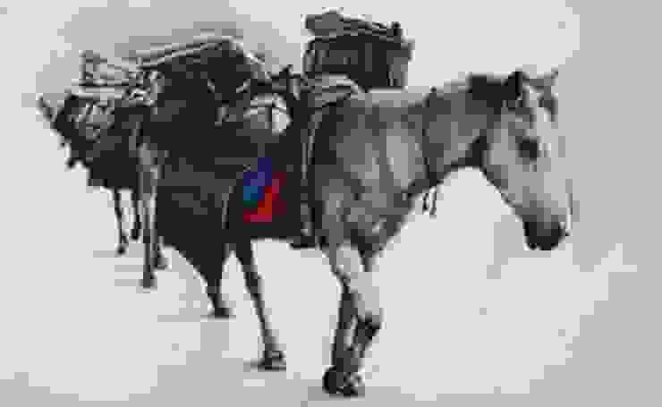 Horse: asian  by Indian Art Ideas,Asian