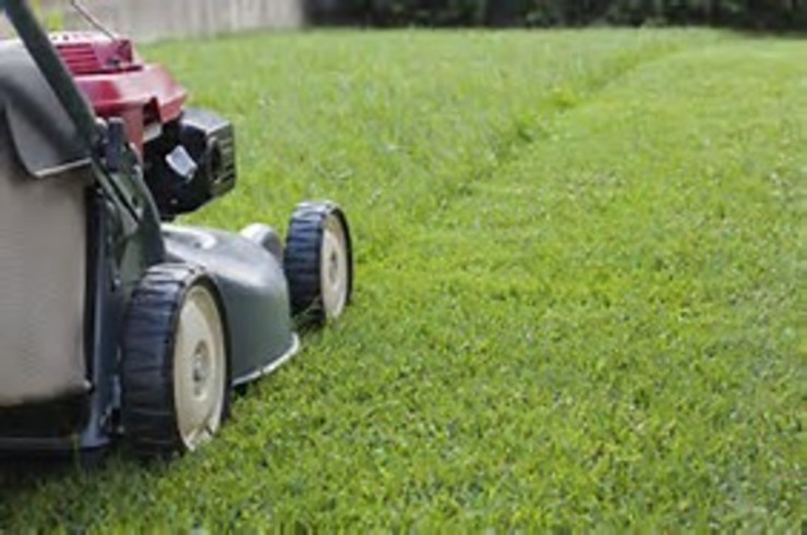 Lawn Mowing Project by Garden Services Pretoria