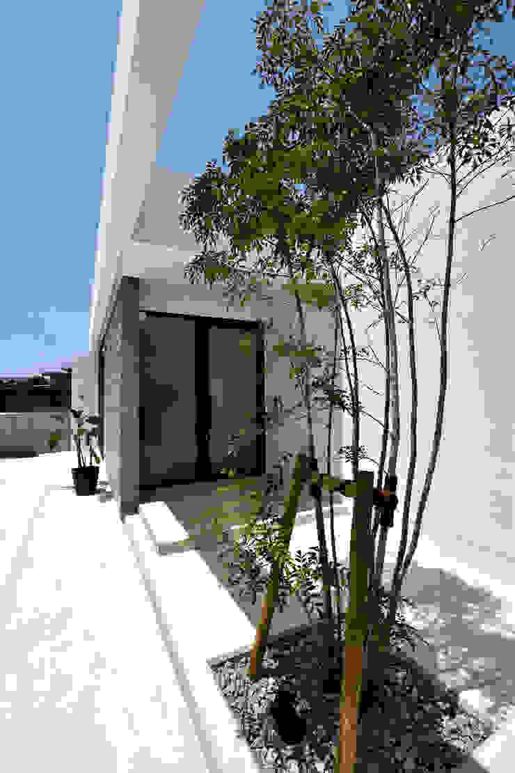 ガラスの玄関、シンボルツリー の Style Create モダン 鉄筋コンクリート